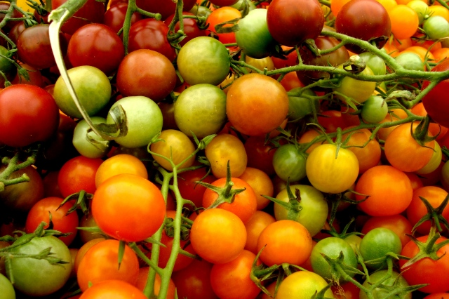 Montgomery Place farm stand heirloom tomatoes