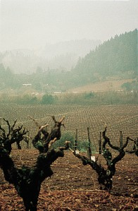 Vineyard_GnarlyVines