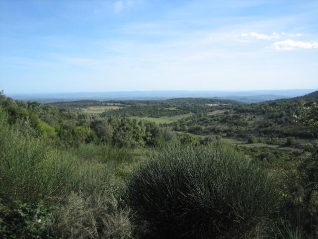 """Languedoc """"Garrigue"""""""