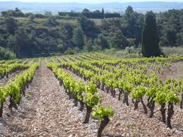 Eulalie's vineyards